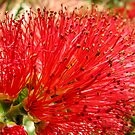 Red Bottle Brush by DPalmer