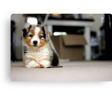 Australian Shepherd Puppy - Sam Canvas Print
