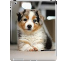 Australian Shepherd Puppy - Sam iPad Case/Skin