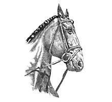 Fine line, hand drawn, Horse in Bridle Photographic Print