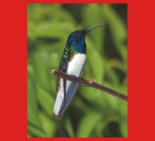Male White-Necked Jacobin Hummingbird Kids Tee