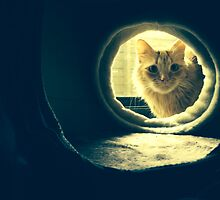Curious Kitty by ninabutton