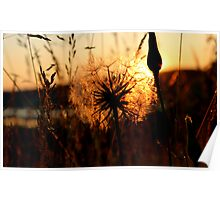 End of Day Summer Light Poster