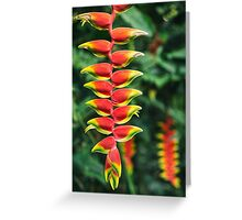 Heliconia - Misiones, Argentina Greeting Card