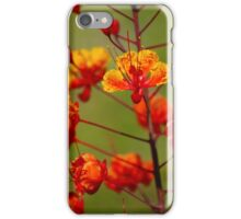 Mexican Bird of Paradise Blossoms iPhone Case/Skin