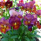 Perfect Pansies by MarianBendeth