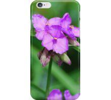 Purple Virginia Day Flower greenery iPhone Case/Skin