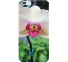 Orchid from Washington DC iPhone Case/Skin