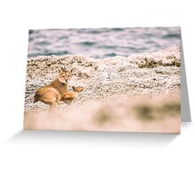 Puma and Cub - Torres del Paine, Chile Greeting Card