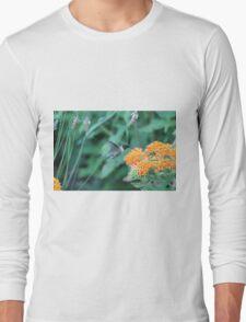 Hummingbird feeding on orange flowers Long Sleeve T-Shirt