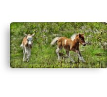 Cut to the Chase  Canvas Print