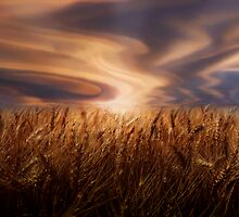 Wheat Field  by Cliff Vestergaard