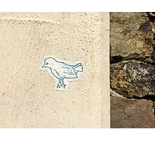 Bird on the Wall Photographic Print
