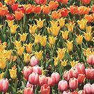 Tulip Garden Throw Pillow & Tote Bag by Gene Praag