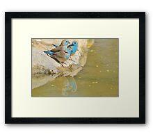 Blue Waxbill - Colorful Wild Birds from Africa - Brotherhood of Joy Framed Print
