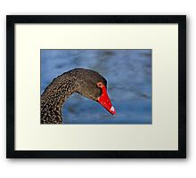 Black Swan Framed Print