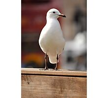 A Nice Photo Of A Seagull Photographic Print