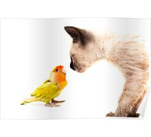 cat with colorful tropical agaporni Poster
