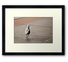 Running Away Seagull Framed Print