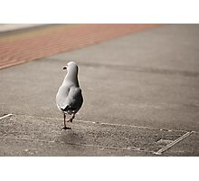 Running Away Seagull Photographic Print