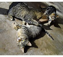 Convoluted Kitties Photographic Print