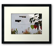 Wishing Tree/Praying Tree Framed Print