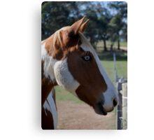Moe Jingles-The Horse  Canvas Print