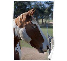 Moe Jingles-The Horse  Poster