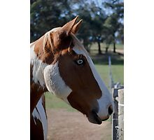 Moe Jingles-The Horse  Photographic Print