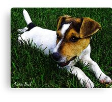 Jack Russell Justin Beck Picture 2015097 Canvas Print