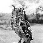 Owl by Louise Bichan