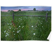 Dramatic Camomile Sunset Poster