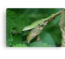 The Green Anole Canvas Print