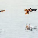 Synchronised landing by nadine henley