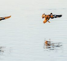 Synchronised landing by nadine henley