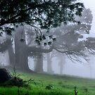 Foggy Wynstay - Mt Wilson NSW Australia by Bev Woodman