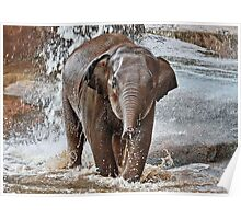 Baby Asian Elephant Poster