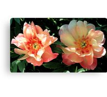 Peonies - 'Magical Mystery Tour' Canvas Print
