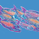 Postcards for the Reef 14: Psychedelic Parrot fish by MiMiDesigns