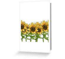 Sunflowers White Greeting Card