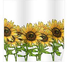 Sunflowers White Poster