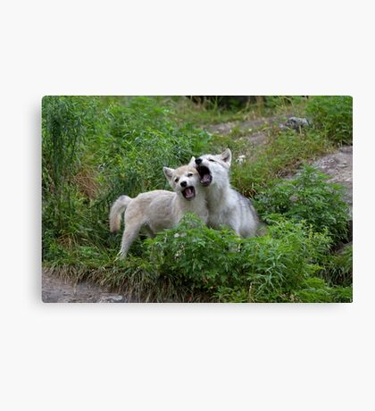 Howling good time - Arctic wolf pups Canvas Print