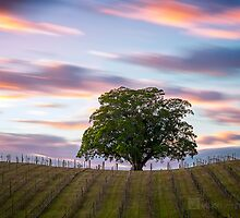Vinyard by Garry Schlatter