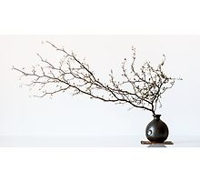 Vase With Branch Photographic Print