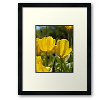 Spring Time Tulips Framed Print
