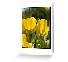 Spring Time Tulips Greeting Card