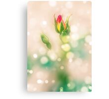 Red and yellow cocktail rambler rose bud Metal Print