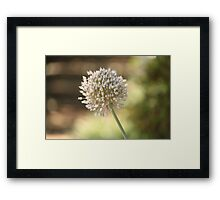 Evening Flower Burst Framed Print