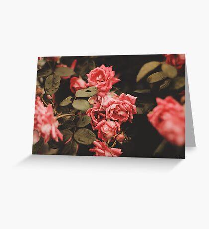 Vintage Roses Greeting Card