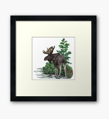 Moose watercolor  Framed Print